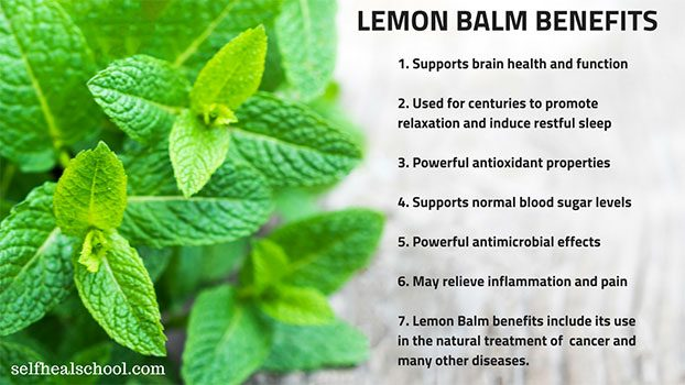 Lemon Balm Benefits – Top 7 Health Benefits of Lemon Balm