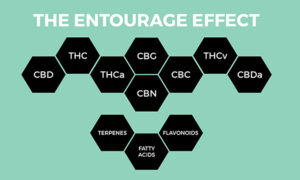Entourage Effect